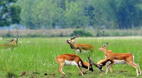 Koshi Tappu Wildlife Reserve Camp